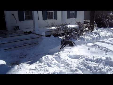 כלבים משתוללים בשלג - חמוד!