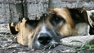 ЗАЩИТА ПРАВ ЖИВОТНЫХ / Закон о защите животных / ЕТВ