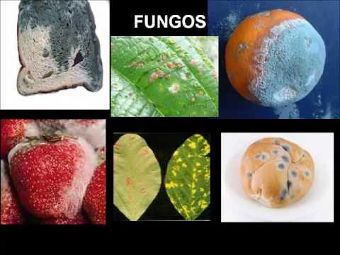 Como retirar um fungo em pregos de pernas um fórum