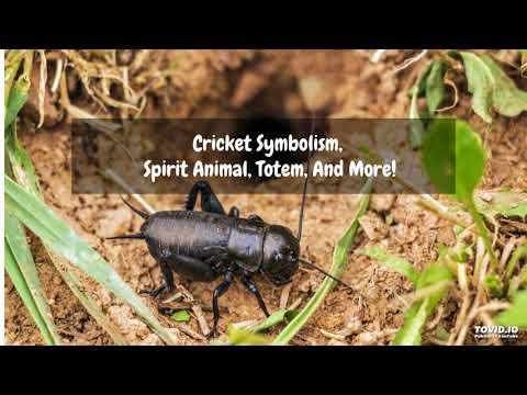 Cricket Symbolism, Spirit Animal, Totem, And More!