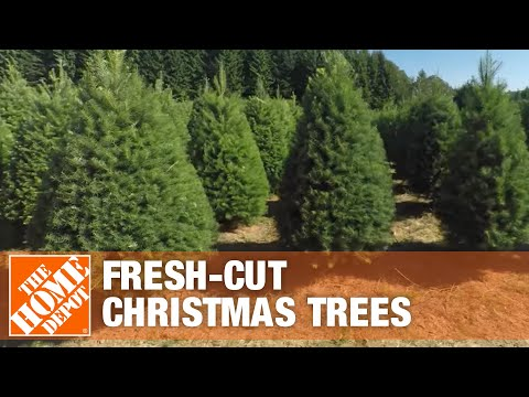 Where Fresh-Cut Christmas Trees Come From – The Home Depot