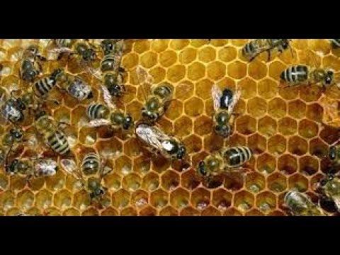 Sungguh Tak Terduga! 14 Arti Mimpi Lebah Madu Menurut Primbon Jawa