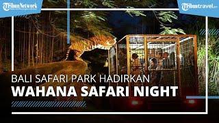 Bali Safari Park Buka Kembali Wahana Safari Night, Simak Harga Tiket dan Jadwalnya