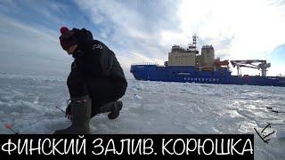 Финский залив отчеты о рыбалке