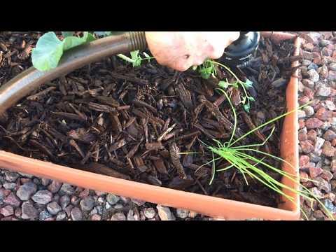 3 Gardening Principles Same in AZ Desert & 60°N Sweden