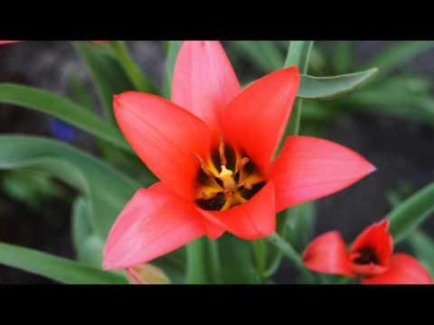 Jeden kwiat- Mieczysław  Fogg