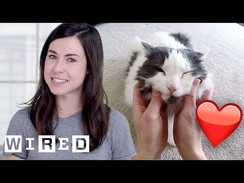 Does Your Cat Really Miss You?