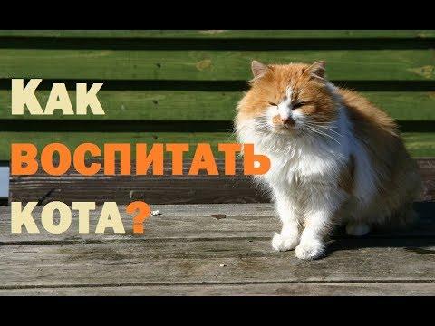 Как воспитать кота?