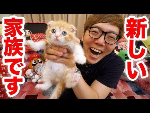 , title : '【ご報告】家族が増えました!猫飼います!【ヒカキンTV】【ねこ  cat】