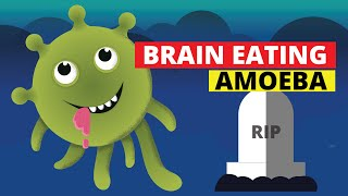 Brain Eating Amoeba (Naegleria fowleri)
