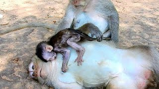 Oh My God! Why Mom Do Like This On Her Baby Monkey - Poor Newborn Very Hungry