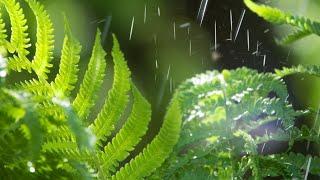 Beautiful Piano Music - Rain Sounds, Relaxing Music, Stress Relief, Sleep Music (Joel)