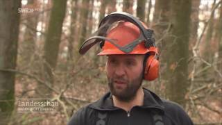Holzrücken Mit Pferdestärke | Eberbach