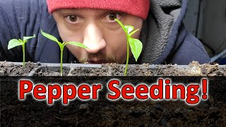 Starting Pepper Seeds Indoors - How, When, and Why! Part 1 of 3