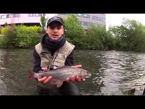 Ryby, rybky, rybičky – 13/2014, premiéra 20.6.2014