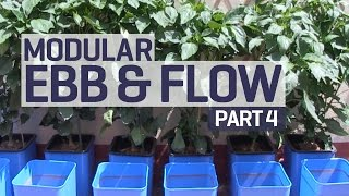 How to set up an Ebb & Flow / Flood & Drain Hydroponics Growing System