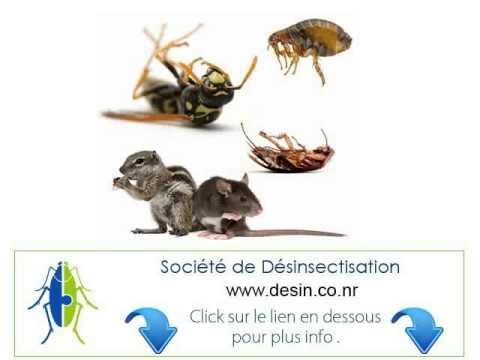 comment traiter les arbres fruitiers contre les fourmis la r ponse est sur. Black Bedroom Furniture Sets. Home Design Ideas