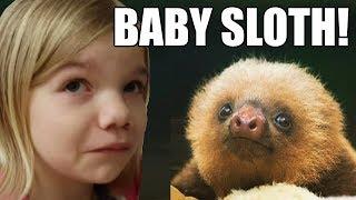 Baby Sloth! So Adorable!   Babyteeth More