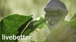 Cantos Gregorianos Sanadores con Lluvia Relajante | Musica Sanadora para la Paz Interior