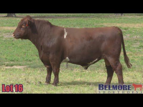 BELMORE THE DON Q70
