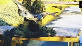 Рыбалка в подмосковье на веслоноса