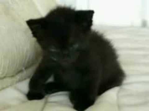 Los Momentos Más Divertidos De Los Gatos