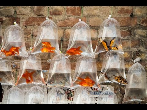Aquarium Fish Market of Kolkata Galiff Street.