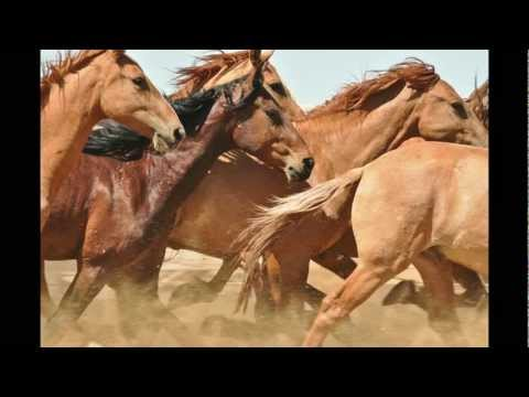 Lifesavers Wild Horse Rescue (Lifesavers, Inc)
