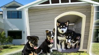 I Built A Dog House For Our 7 Husky Puppies