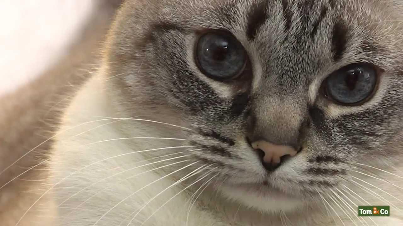 Ben je klaar om een kat in huis te halen