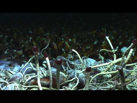 Bakuna kung paano magpalayas worm tuta
