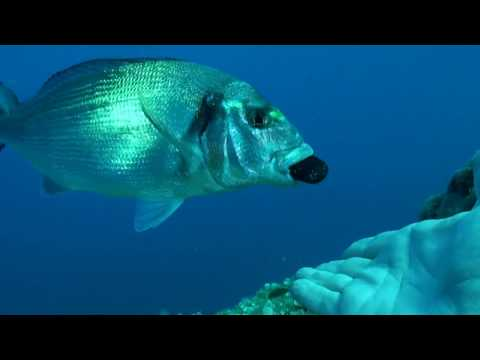 Pesca di una carpa dacqua video