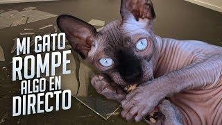 MI GATO ROMPE ALGO EN DIRECTO | MEJORES MOMENTOS #3