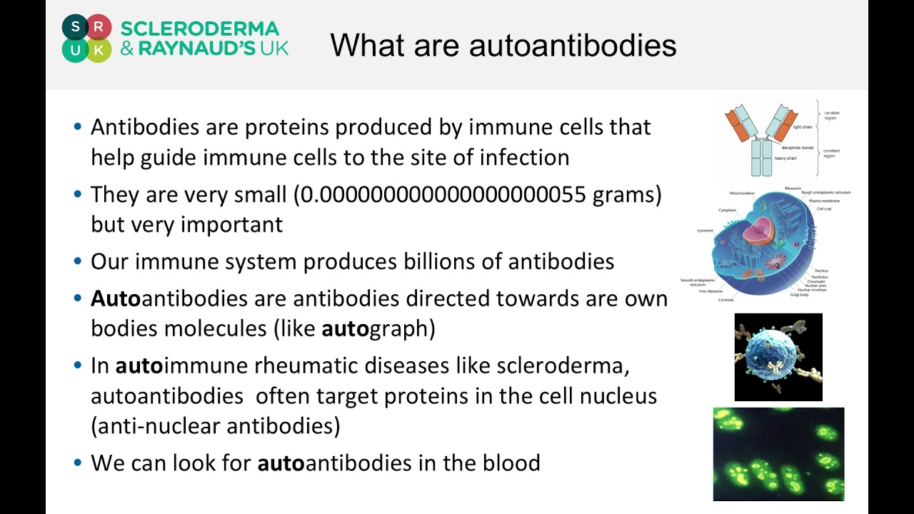 What are auto-antibodies?