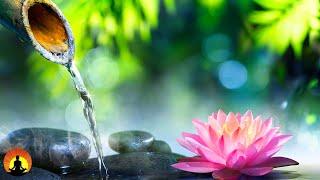 Relaxing Music, Healing Zen Music, Sleep Music, Meditation Music, Reiki Music, Calming Music ☯3558
