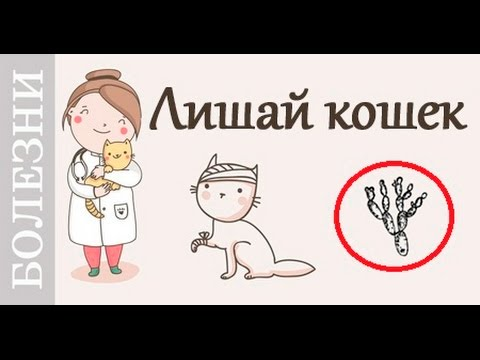 Лишай у кошек, признаки, лечение. #Советы_ветеринара