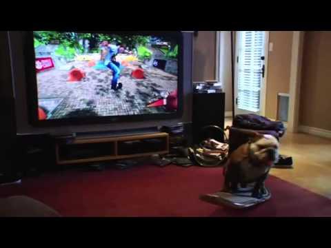 Kinh ngạc trước tài năng của game thủ chó