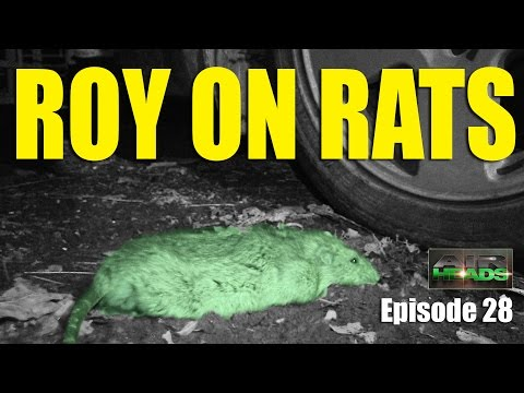 Roy on Rats – AirHeads, episode 28