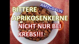 ATTENTIONE!Bittere Aprikosenkerne/VITAMIN B 17 nicht nur bei KREBS!?