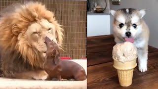 Meilleures Vidéos Drôles de Chat et de Chien 🐶🐱- Best Funny DOGS et CATS #80