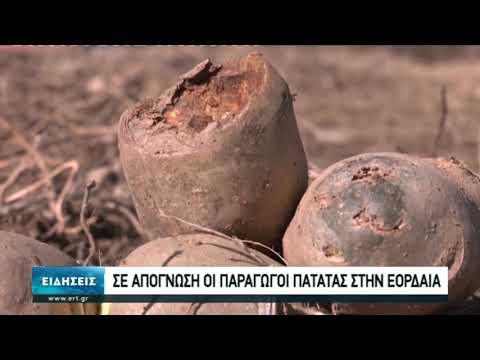Σε απόγνωση οι παραγωγοί πατάτας στην Εορδαία | 07/11/2020 | ΕΡΤ