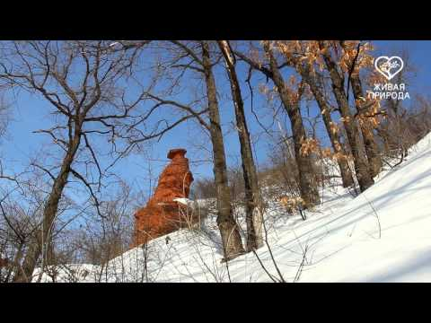 Видео: Видео горнолыжного курорта Зирган-Тау в Башкортостан