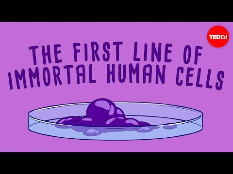 Image Result For Life Animated Radiolab