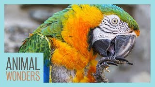 The Scariest Parrot Disease