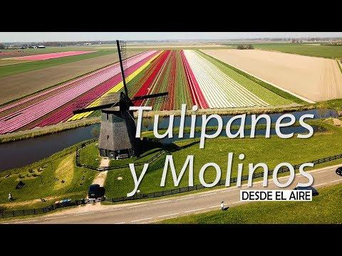 Campos de tulipanes a vista de dron. Visitando Keukenhof - PAISES BAJOS 4