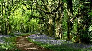 8 Hour Nature Sounds-Relaxation-Meditation-Birdsong-Birds Singing-Forest Sounds