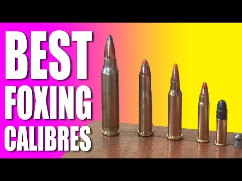 Best foxshooting calibres