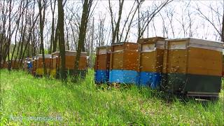 méhikék tájolnak