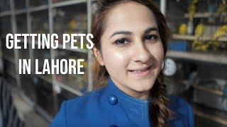 Getting pets in LAHORE - Vlog 15