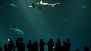 Monterey Bay Aquarium, San Francisco